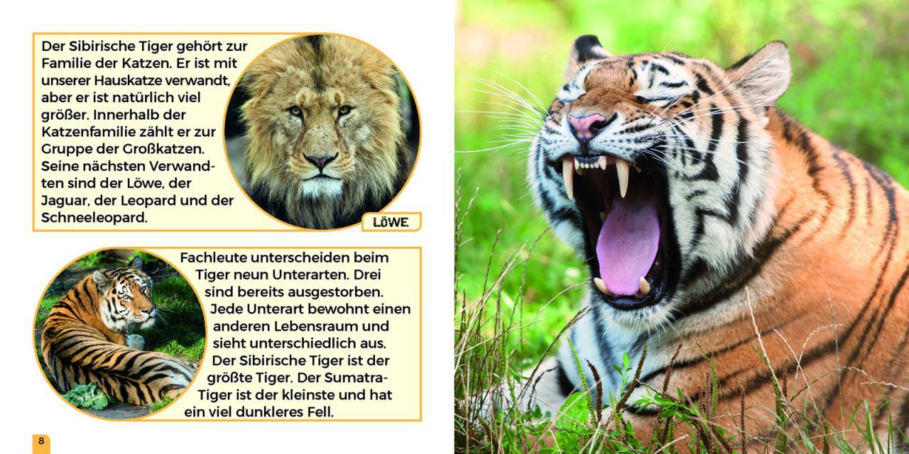 Großartig Lowe Malseite Bilder - Malvorlagen Von Tieren - ngadi.info
